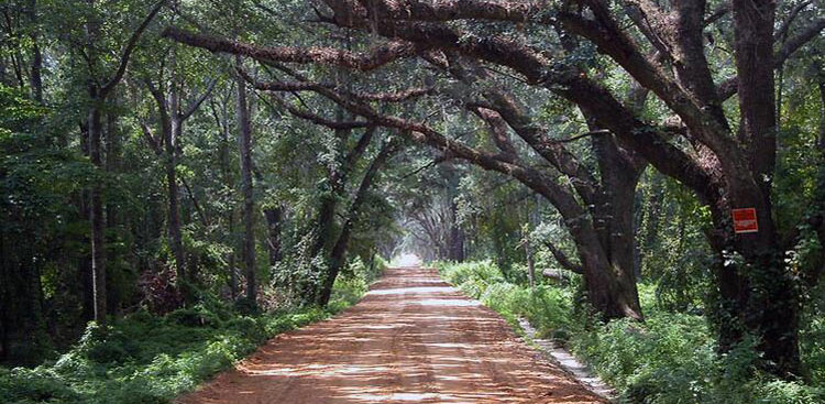 <strong>Twelve-mile Post Road - Red Hills Scenic Road</strong><br />Tall TImbers has taken a leadership role in establishing a scenic roads program for Thomas County, GA. In Leon County, FL, Tall Timbers succeeded in getting several canopy roads protected by county ordinance.