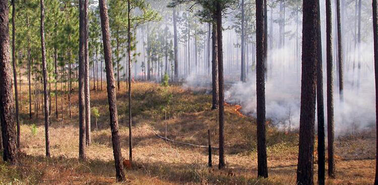 <strong>Fire Ecology Program</strong><br />Prescribed burn on the Wade Tract Preserve. Prescribed Fire is a safe way to apply a natural process, ensure ecosystem health, and reduce wildfire risk.