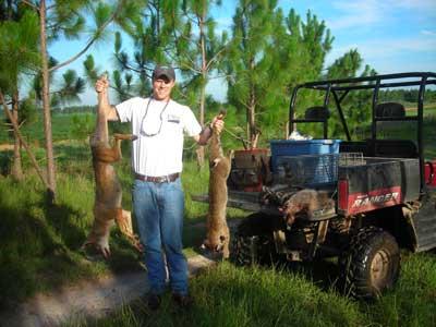 Albany quail project