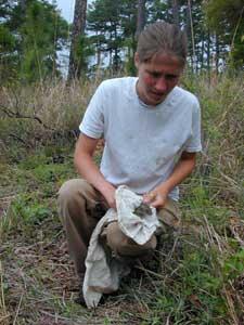 Release of Cotton Rat