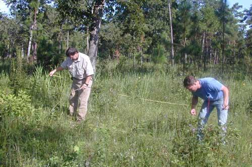 Gopher tortoise habitat sampling.