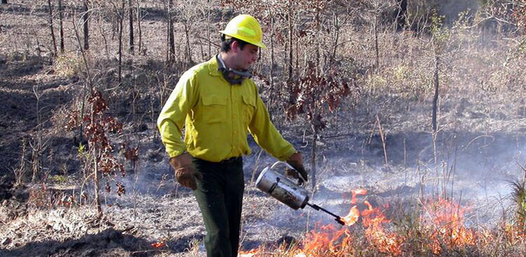 <strong>Fire Ecology Program</strong><br />Fire ecologist, Kevin Robertson, lights a prescribed fire on a research plot.