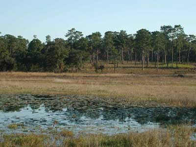 Ephemeral pond on easement protected land in the rural Red Hills.