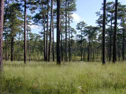 The Wade Tract Preserve