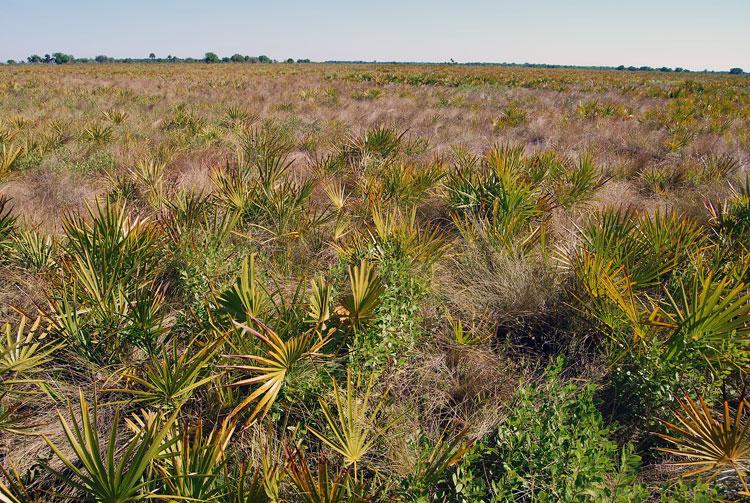 Florida Dry Prairie