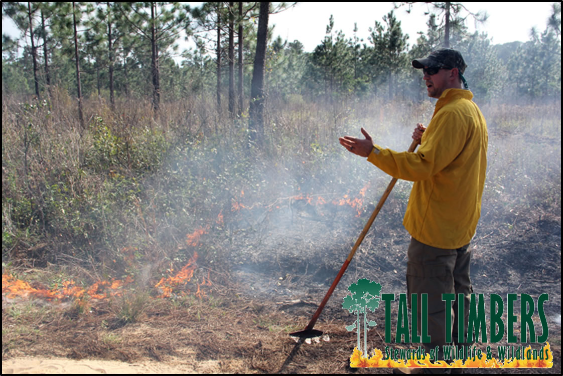 Theron Terhune talks about the importance of fire for land management at Tall Timbers