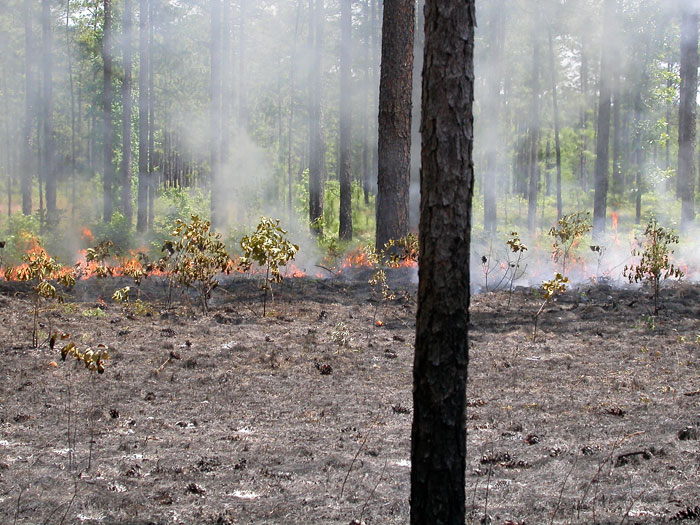 Burning to control hardwood re-sprouts