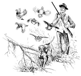 Quail hunter graphic