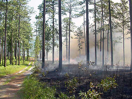 Prescribed Fire on Tall Timbers