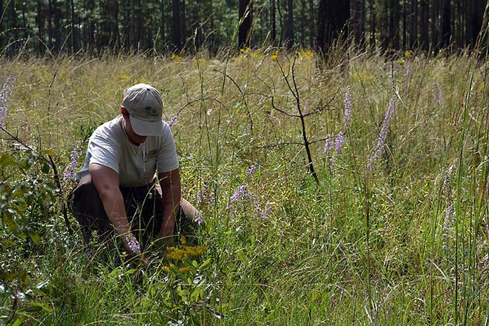Fire Ecology Technician, Angie Reid identifying plants