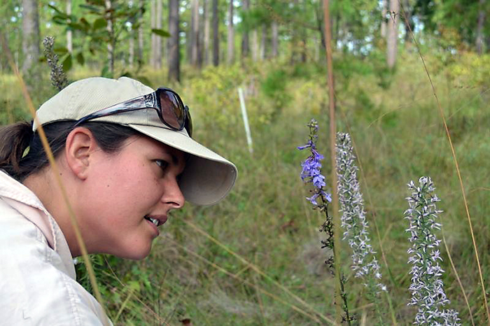 Angie Reid looking at ants on blue sage