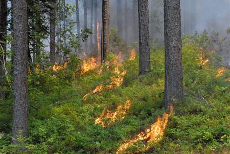 Spot head fire