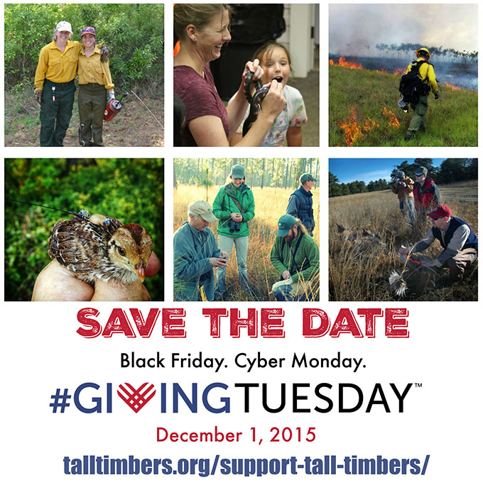 Giving Tuesday Collage