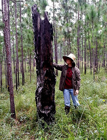 Jean Huffman at the Wade Tract by the kind of fire-scarred tree that can record multiple fires.