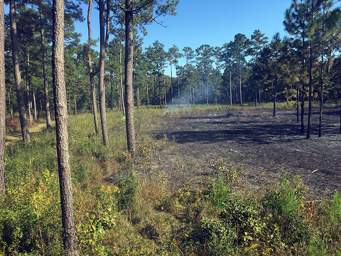 Mowed vegetation after burn