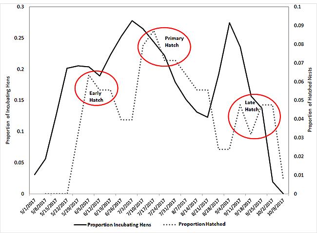 Quail Hatch graph