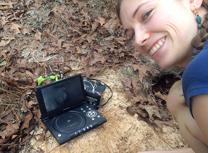 Rebecca Zeroth, gopher tortoise survey crew leader, is scoping a burrow with a tortoise inside.