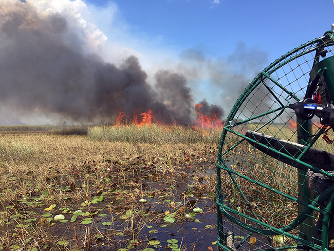 Burning at Arthur Marshall Loxahatchee National Wildlife Refuge by airboat