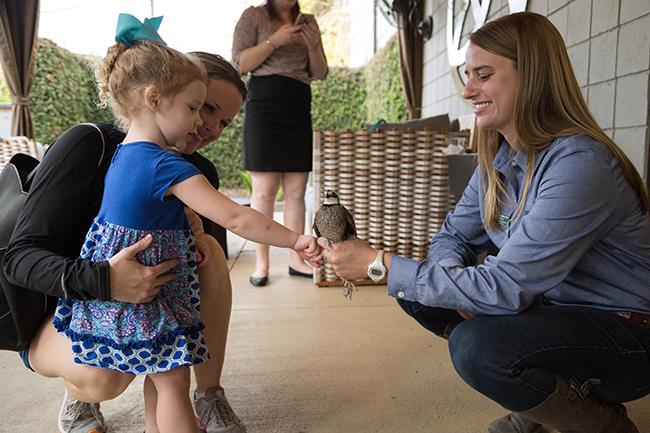 kid-quail