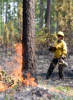 Fire Ecologist Angie Reid. (Photo by Hannah Brown)
