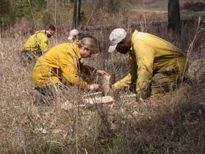 Pre-fire fuel measurement in a the Tall Timbers Fire Plots (Stoddard Plots). Photo by Kevin Robertson.