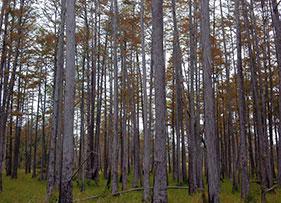 Cypress_pond_fall-color_web