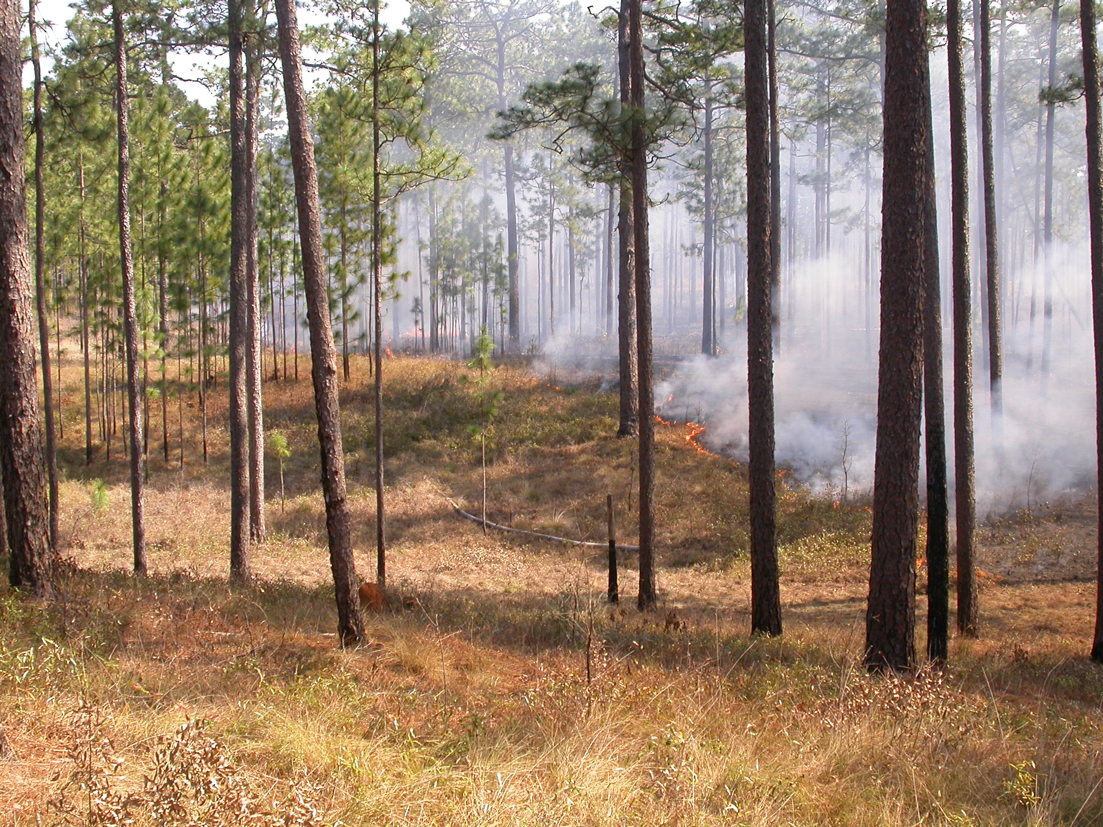Wade Tract burn, March 2009