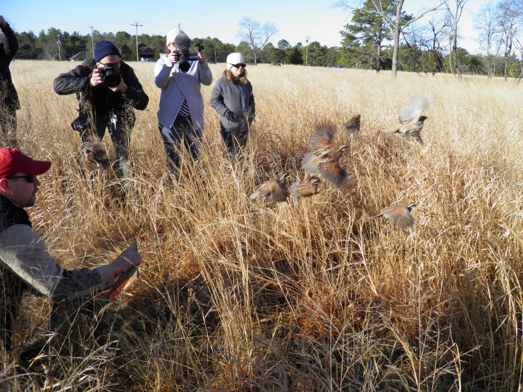 Release of Translocated Birds on a research study site in New Jersey