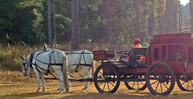 Hunting from horseback and mule-drawn wagons: a long-time quail hunting tradition.