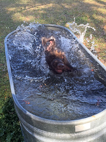 Beta cooling off after hunt