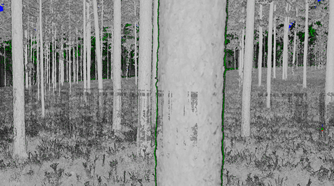 Forest scan