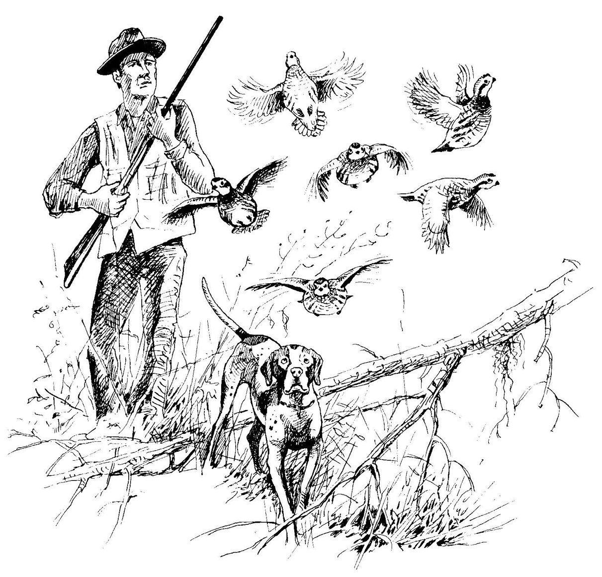 Quail Hunter