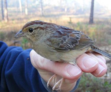 Stoddard Bird Lab