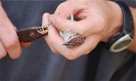 Tagging Sparrow