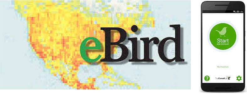 eBird IMG app