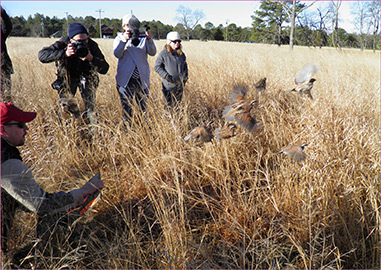 Translocated birds released in New Jersey