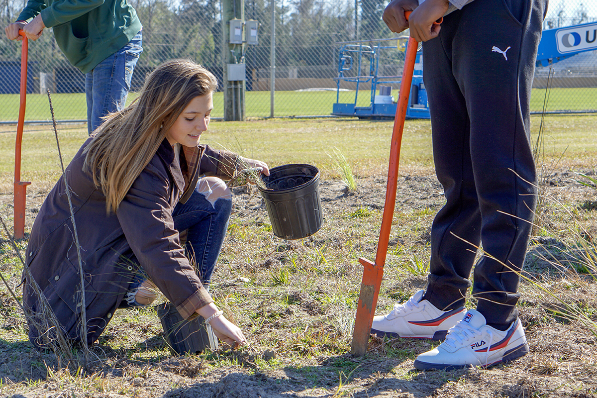 Students work in teams to plant wiregrass plugs throughout the site.