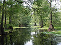 Lake Iamonia