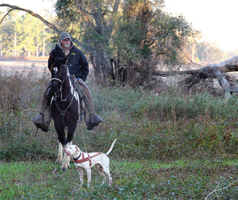 Dog handler with his pointer