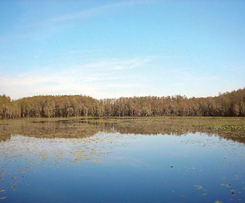 The Aucilla River